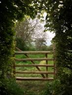 5 foot chestnut gate