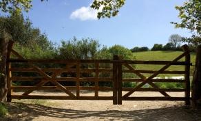 pair of chestnut field gates