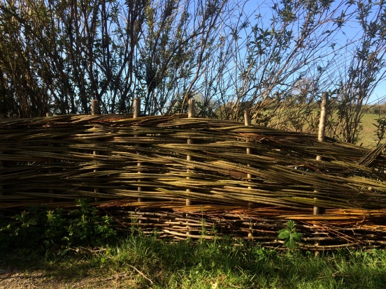 Woven willow fence