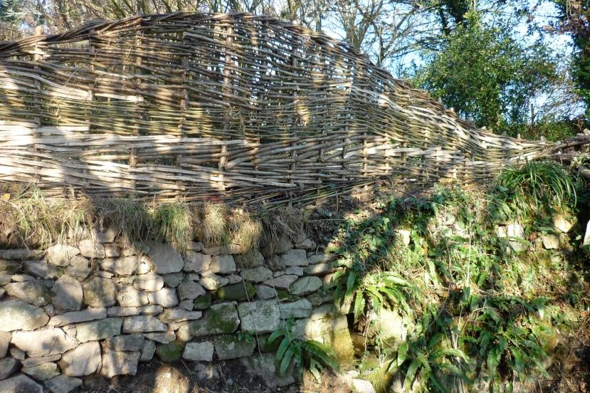 Split hazel and willow fence