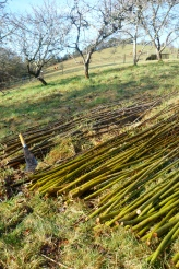 Willow ready to use for fence