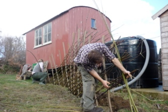 Weaving willow for fence panel