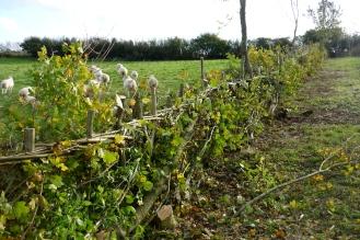 mixed leafy midland hedge