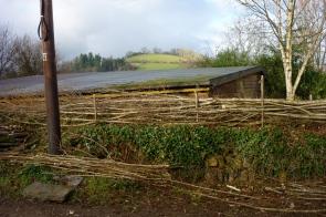 devon hedge being steeped
