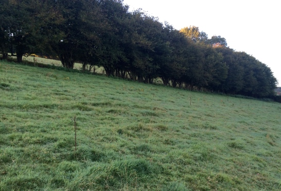 The hedge before work commences