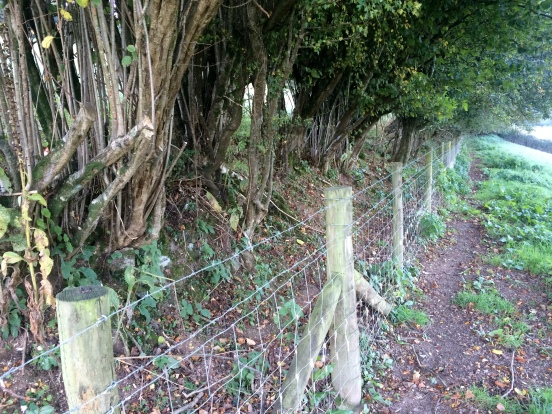 A neglected hedge