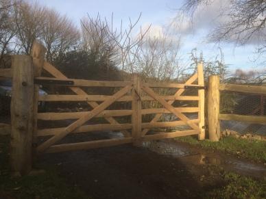 two Devon style chestnut field gates