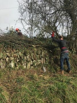 blackthorn hedge